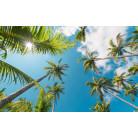 Coconut Heaven II