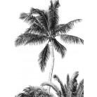Retro Palm